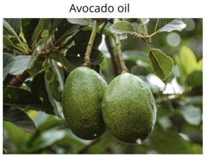 avocadooil 1